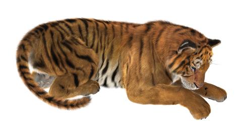 Tiger øvelsen - Metakognitiv terapi øvelse